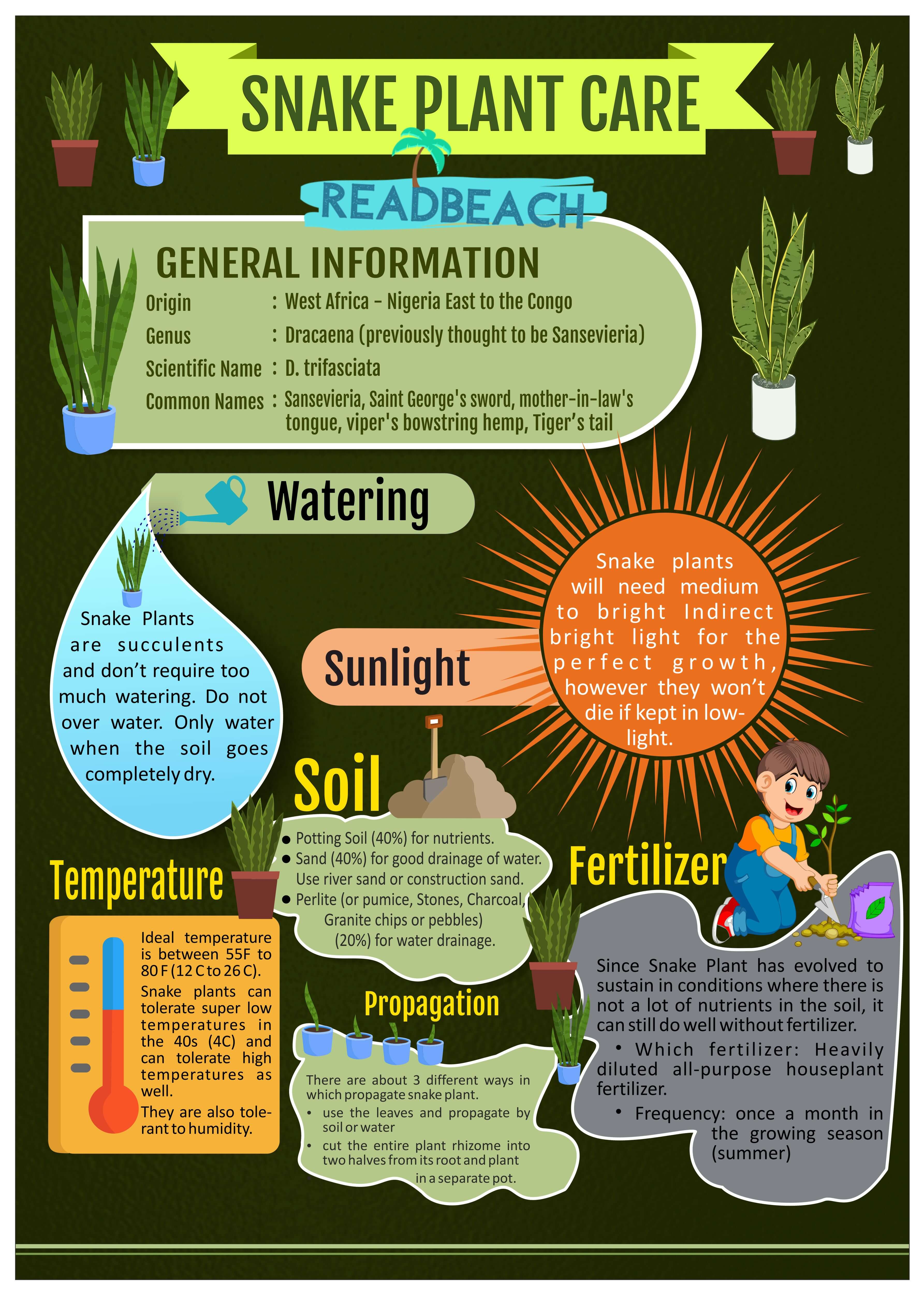Snake Plant Care Infographic